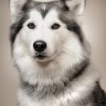 Seguros Perros